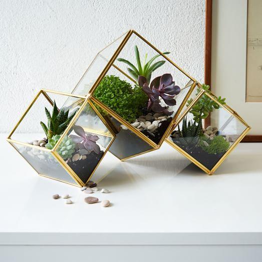 cube-terrarium-c