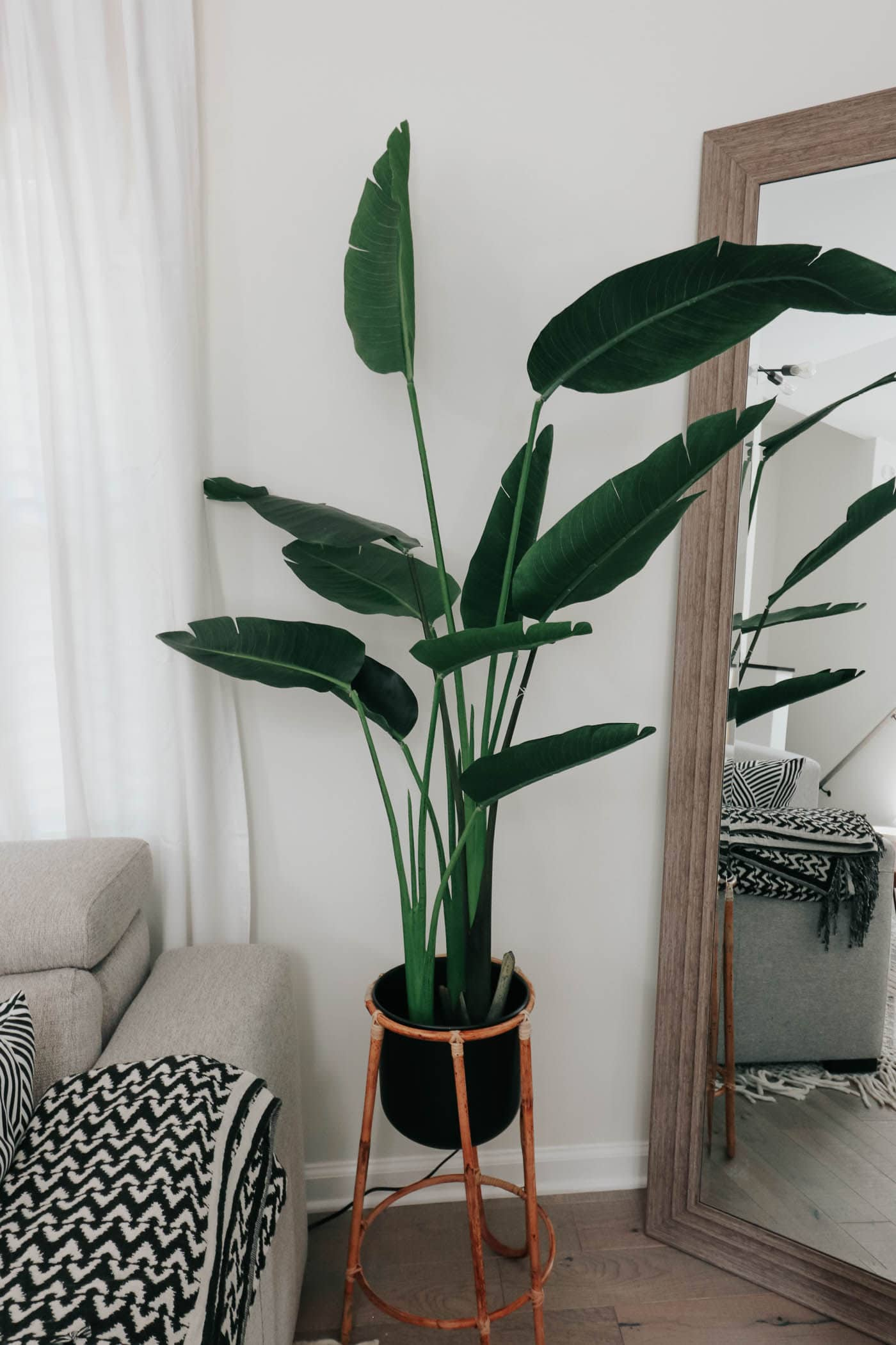 amazon faux bird of paradise plant